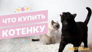 Что купить котенку | Советы владельцам