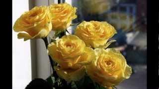 розы подруге.mpg