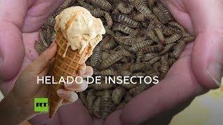 Helado hecho con leche de insecto: Nuevo 'supelimento' respetuoso con el medio ambiente