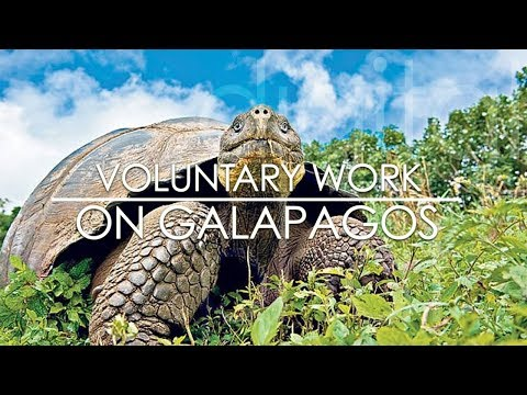 Voluntary Work on Galapagos - Life on a farm