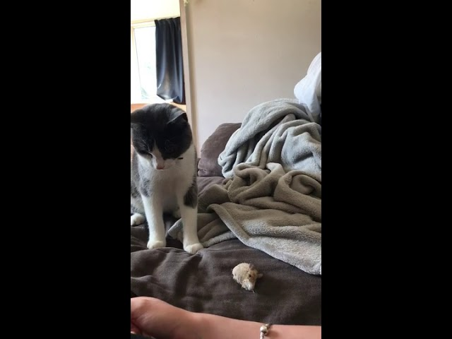 Cat and Owner Play Fetch with Mouse – 1008703