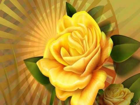 Yellow roses pictures youtube yellow roses pictures mightylinksfo