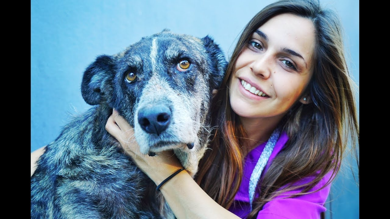 amazing-old-dog-was-dying-she-needed-a-miracle