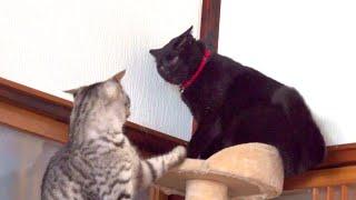 なぜかめちゃくちゃキレてる黒猫と許しを請う猫。