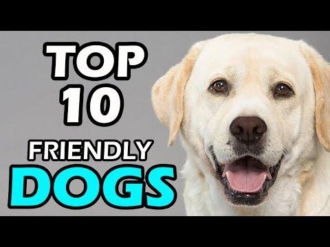 TOP 10 FRIENDLY DOG BREEDS