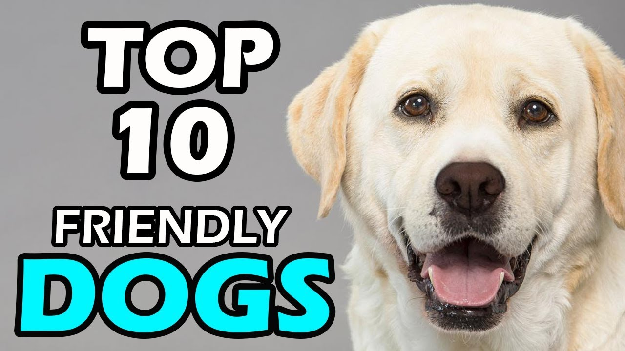 Top 10 Friendly Dog Breeds You