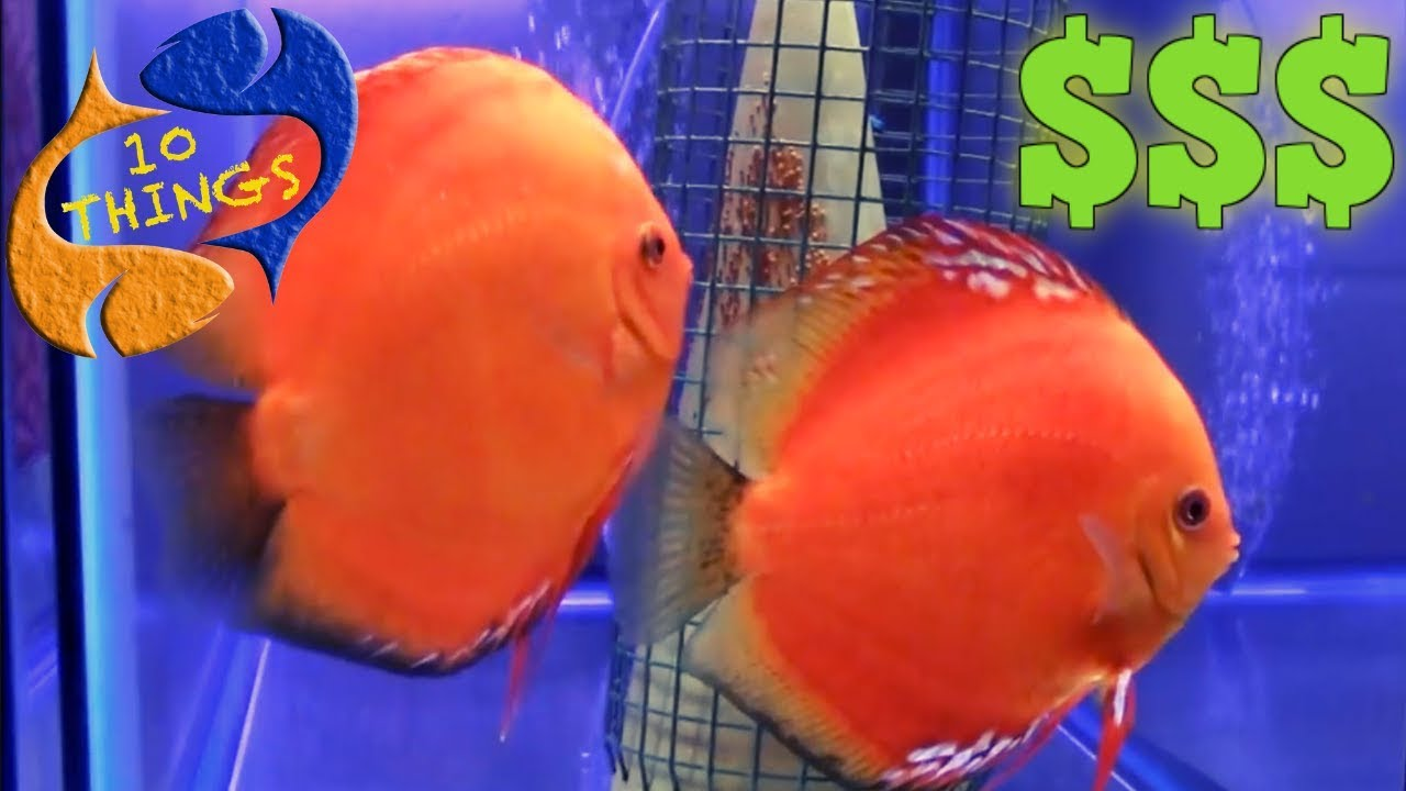 Make Money With Fish? 10 Things You Should Know About Breeding FISH For  Profit