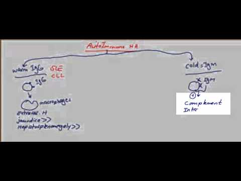 Usmle Step 1 Hematology 24 video