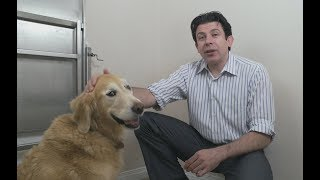 Tips for preventing arthritis in your dog