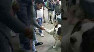 Pawan singh is playing with dog