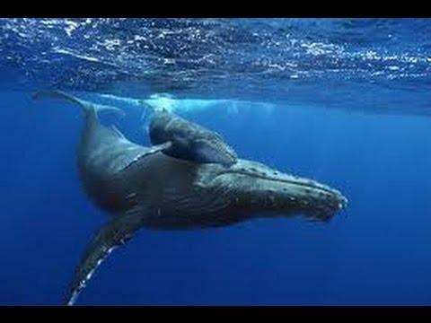 Humpback Whales   Watch Humpback Whales पूरी फिल्म