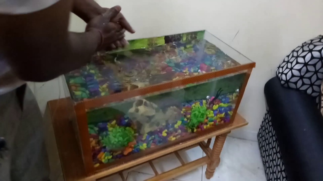 How To Make An Aquarium At Home Process Do It Yourself