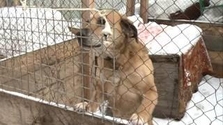 Приют собак можно смотреть онлайн