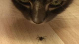 The Death Of A Spider (original naked version)