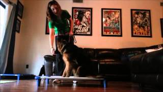 How To Teach The Place Command - Take The Lead K9 Training