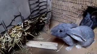 Разведение кроликов в яме .Эксперимент №1(Посмотрев различные видео на ютубе про разведение кроликом в яме ,я решил, а чем я хуже ,и на личном опыте..., 2016-12-10T15:37:37.000Z)