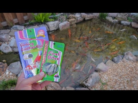 MINI FISH FOOD For NEW BABY FISH!!!