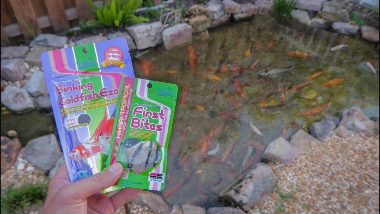 mini-fish-food-for-new-baby-fish