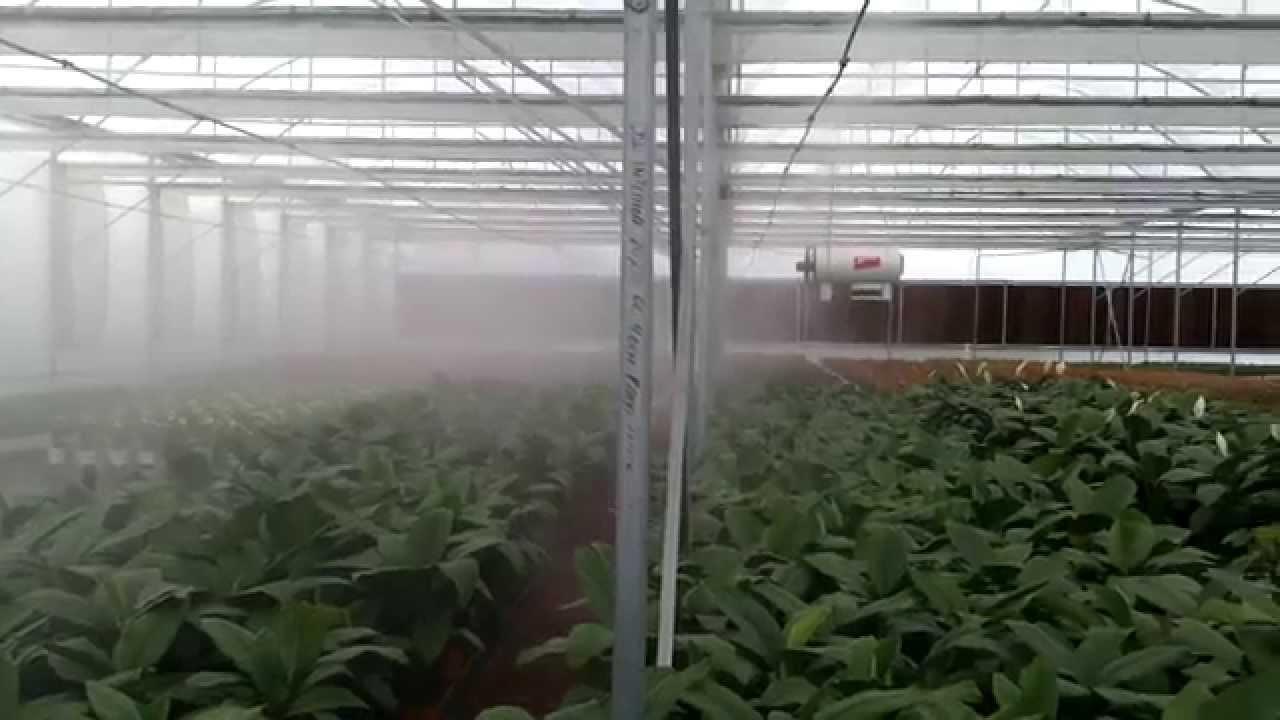 Greenhouse Misting System : Nebulización humidificación fogging system greenhouse