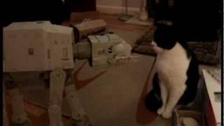 Star Wars AT-AT Imperial Walker vs Cat