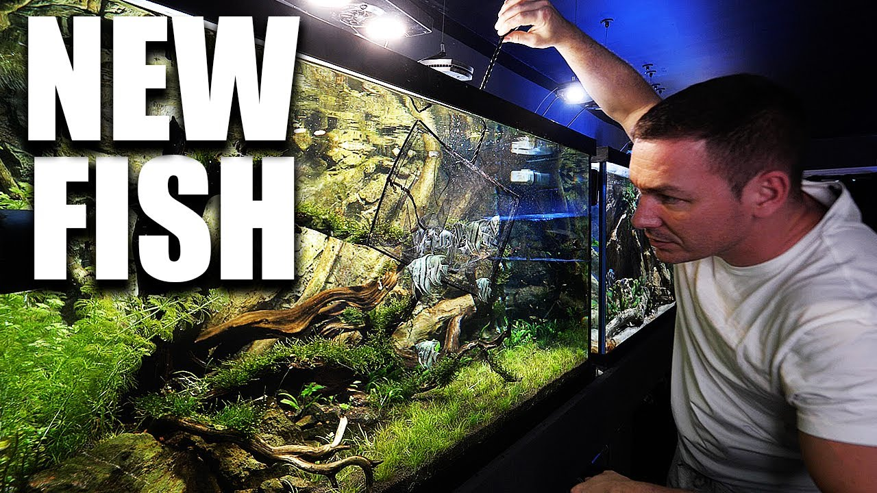 This aquarium NEEDED this fish!! (Angelfish) - download from YouTube for free