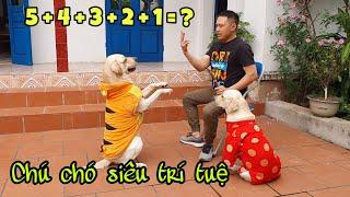 Chú chó Củ Cải đi thi Siêu Trí Tuệ Việt Nam, ai cũng phải trầm trồ | Super Brain Dog