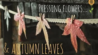 Pressing flowers and autumn leaves