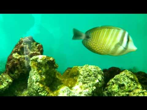 ONGC Aquarium Videos Oil and Natural Gas Corporation