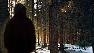 Strange Sightings Of Bigfoot Swimming