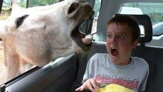 Vídeos para morir de Risa. Animales ASUSTANDO a personas.