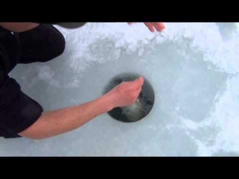 Biggest Brown Trout In The World Ice Fishing