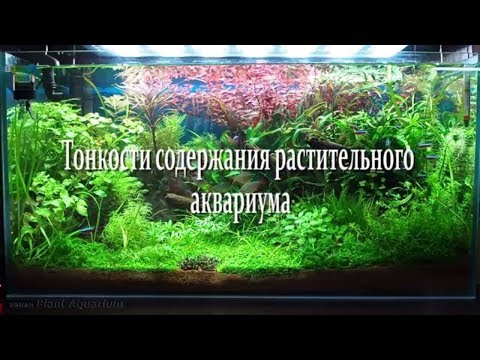 Тонкости содержания растительного аквариума