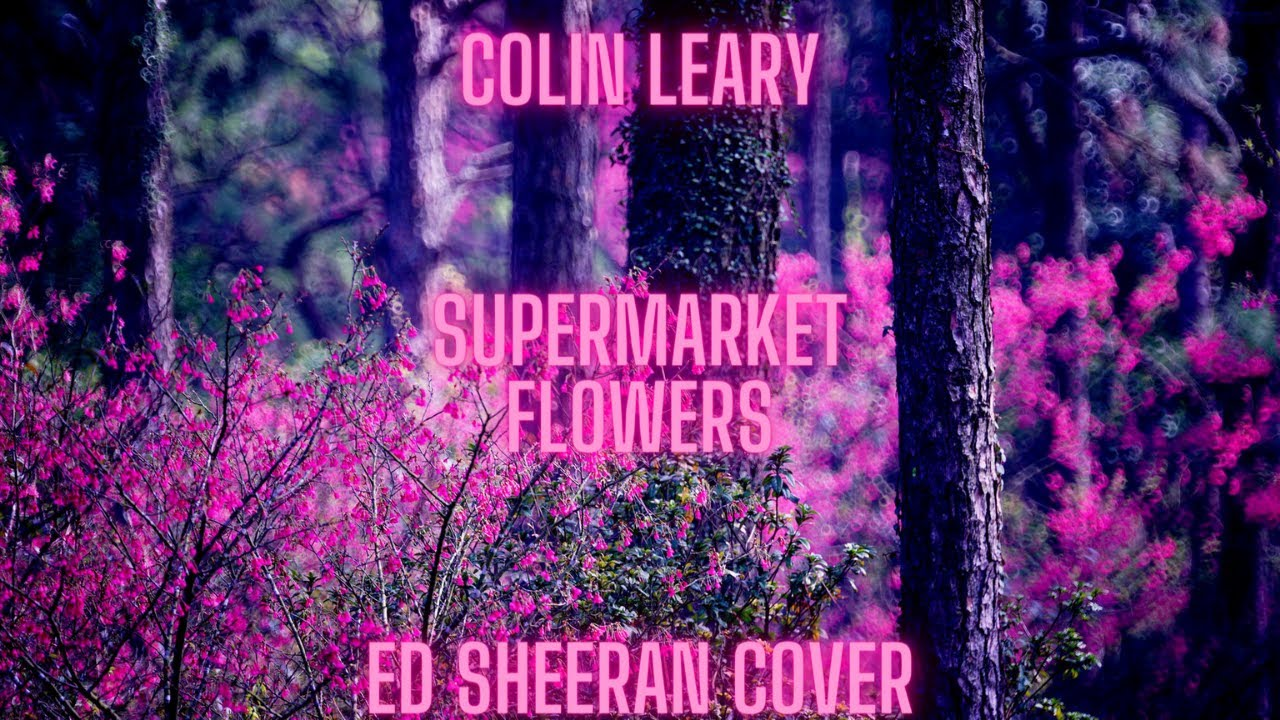 Ed Sheeran - Supermarket Flowers | Piano and Strings Cover