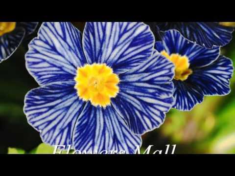 Las flores azules mas hermosas del mundo