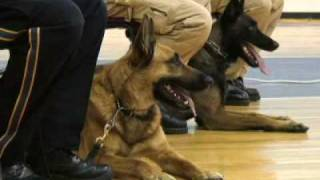 Police Dogs And Proud Of It  [delaware Online News Video]
