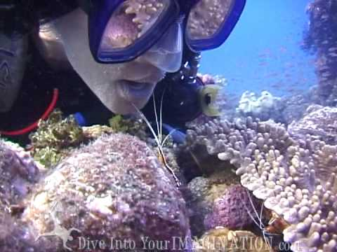 Cleaning Stations - Ocean Animals - Creature Feature