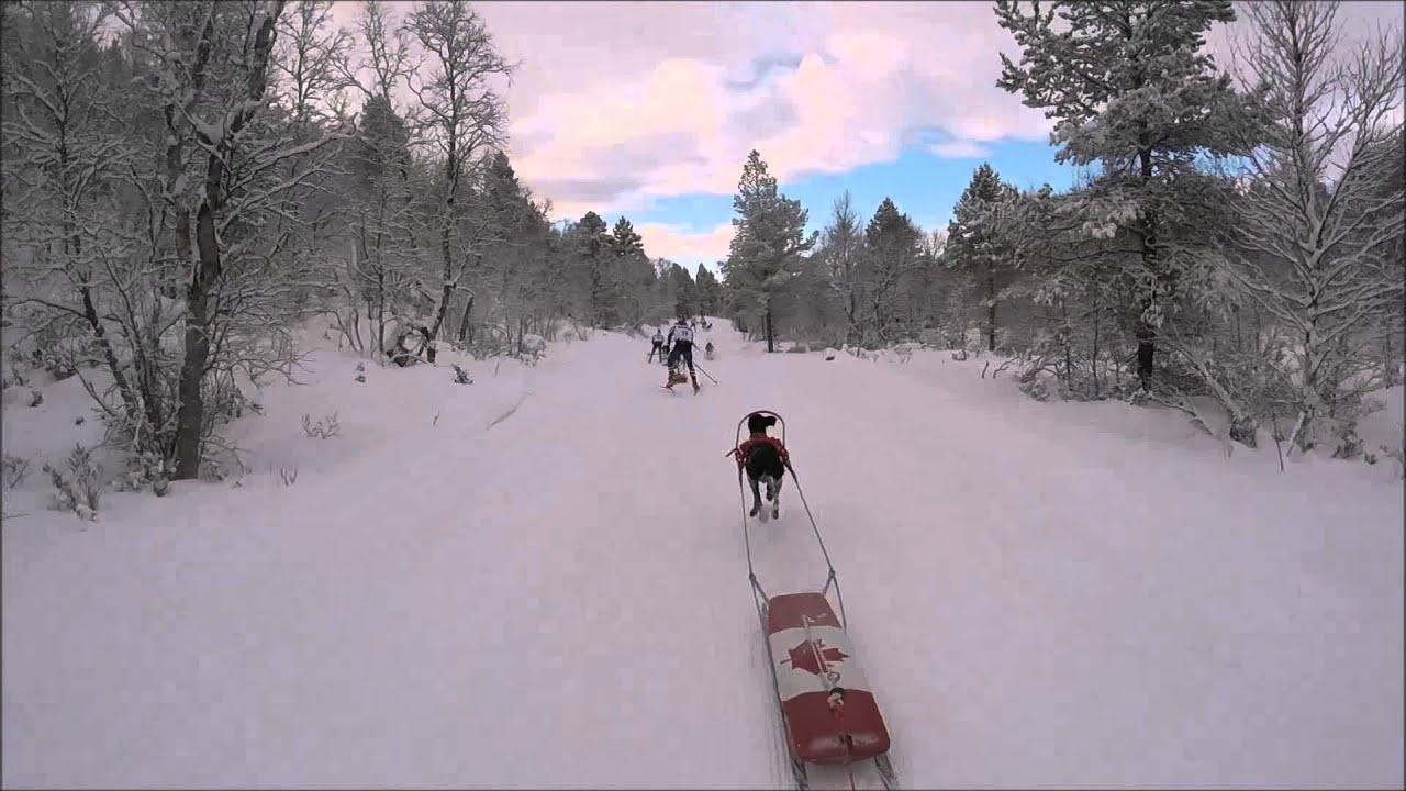 2016 EU wch combine pulk/skijor 15k