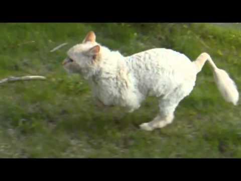 Slow Mo Cat Video