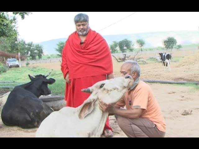 Rescued cows sent to Shiv Yog gaushala at Alwar