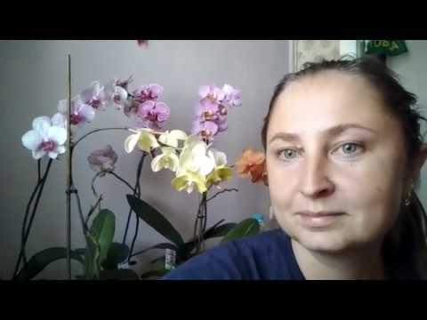 Коктейль для орхидей /нв101 и циркон.