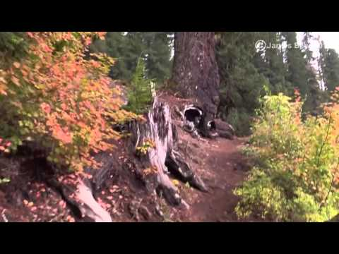 Virtual Hike: Old Growth Forest, 1 hour - Lake, Lava Rock - Actual Audio(#2A)