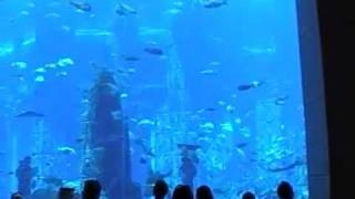 Dubai Atlantis Hotel The Palm auf der Palme Aquarium Luxushotel