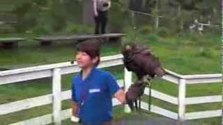 栃木県にある那須どうぶつ王国のバードバンショーで見られる猛禽類です...