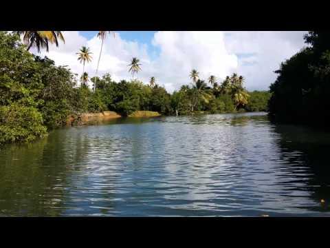 Rio Espiritu Santo (Lancha La Paseadora) SHORT VERSION - Rio Grande, Puerto Rico