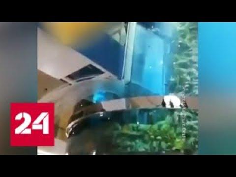 """Потоп в ТЦ """"Океания"""": гигантский аквариум дал течь - Россия 24"""