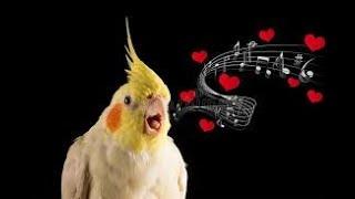 #Bird Whistle Training! 8 Hour Loop!