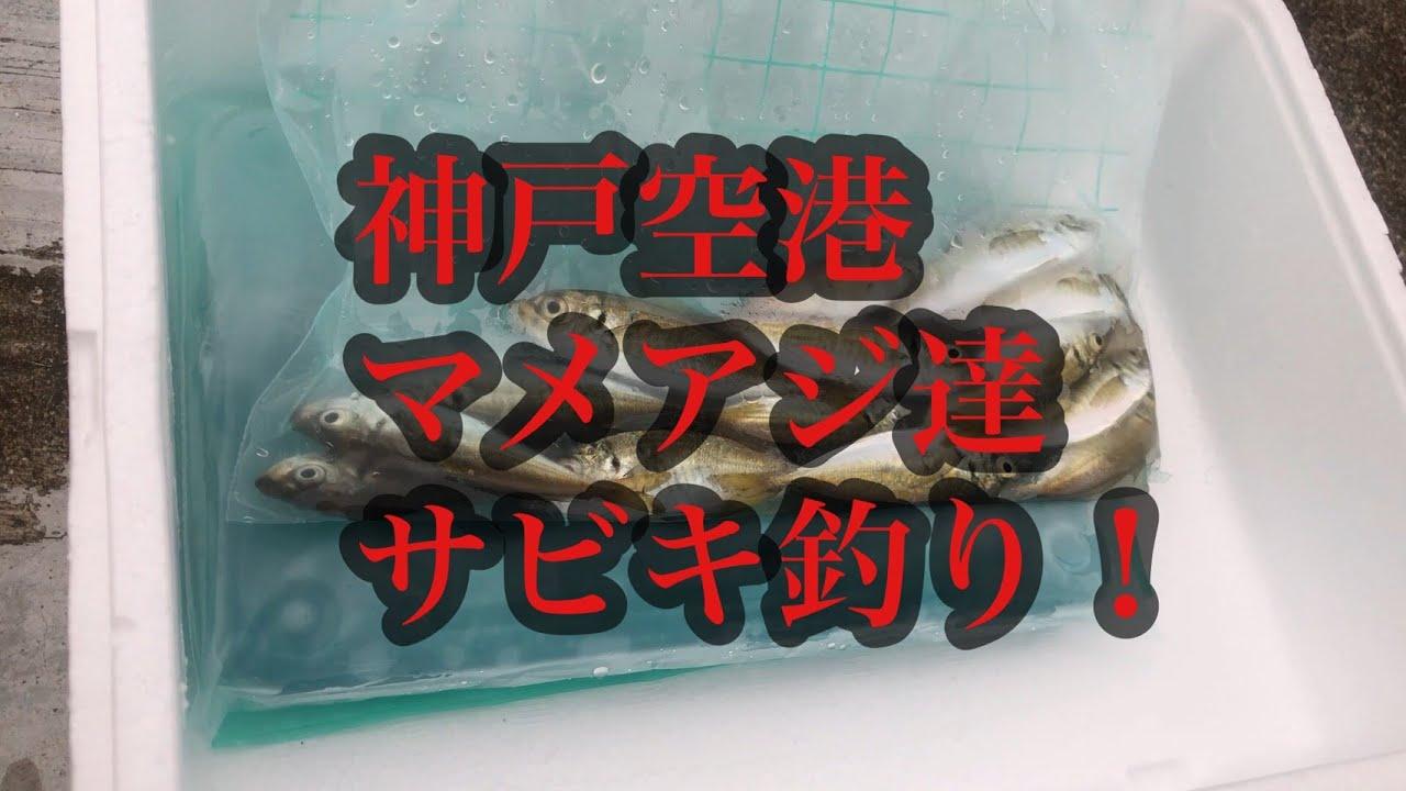 神戸空港夕涼み釣りでマメアジ達!fishingmax神戸ハーバー店