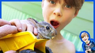 Animals and Dump Trucks - Rescuing Injured Baby Bunny Rabbit