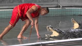 Тайланд.Паттайя.Шоу крокодилов