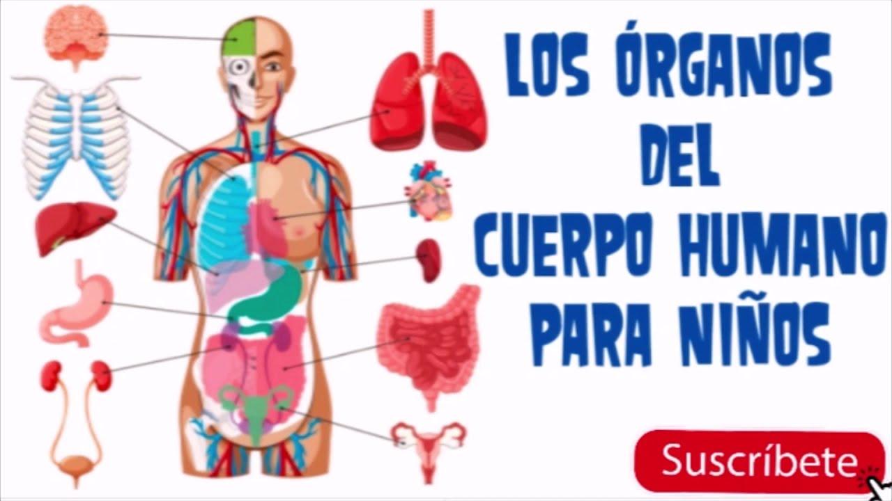 Los órganos Del Cuerpo Humano Para Niños Youtube